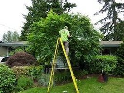 Titusville Tree Service Will Help You Conserve Trees   Tips For the Thrifty DIY Bathroom Tiler   Pioneer in Tech Posts   Scoop.it