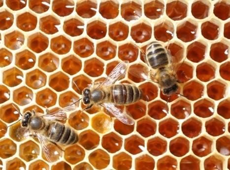 [(Ré)écouter] Comment sauver les abeilles ? / France Inter   Variétés entomologiques   Scoop.it