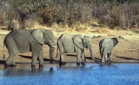 allAfrica.com: InFocus » Tanzania Minister Calls for Tougher Poaching Laws | Wildlife and Environmental Conservation | Scoop.it