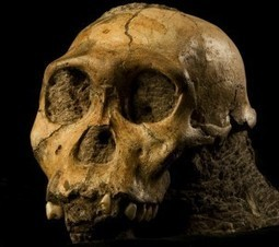 Ancient Tartar, Other Dental Clues Reveal Unexpected Diet of Early Human Relative | Observations, Scientific American Blog Network | Anthropology and Archaeology | Scoop.it