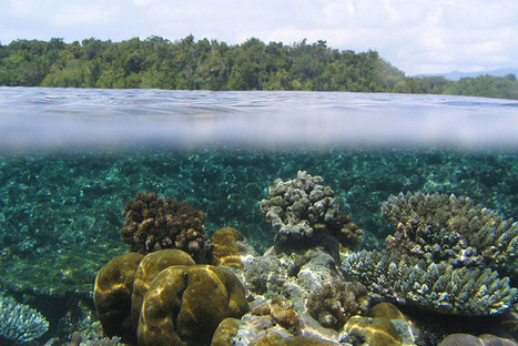 Snorkeling in the Stunning South Pacific - A Beach Blog   Luxury Travel   Scoop.it