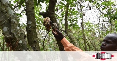 Non, Monsieur Le Foll, malheureusement, la France ne soutient pas l'agro-écologie en Afrique | Nourrir la planète... autrement | Scoop.it