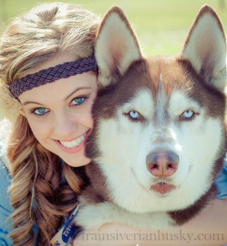 Siberian Husky Training |Care | Health - Just another WordPress site | Train your siberian husky online | Scoop.it