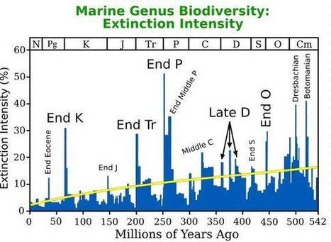 L'extinction des espèces du fin du Permien a été très rapide | tout et rien | Scoop.it