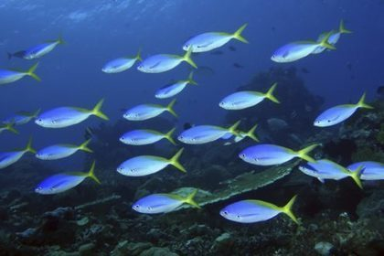 Atauro island has highest average reef fish diversity in the world | Aquaculture Directory | Scoop.it