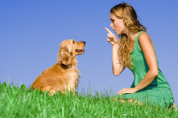 5 Basic Dog Training Commands You Need to Know | How to train your dog | Scoop.it