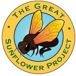 About The Great Sunflower Project | GarryRogers Biosphere News | Scoop.it
