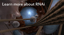 RNAi Animation (Nature Reviews Genetics) | biotechnology | Scoop.it