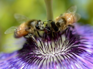 West Nile Spraying Kills Bees (and other biosystem insects) | Biodiversity IS Life  – #Conservation #Ecosystems #Wildlife #Rivers #Forests #Environment | Scoop.it