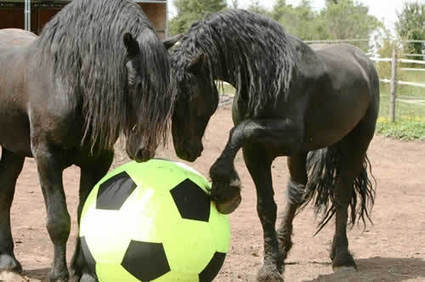 The 7 Best Horse Toys To Relieve Stall Stress (videos) | Horse and Rider Awareness | Scoop.it