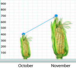 Tanzania: Maize flour price doubles as govt says No to controls | MAIZE | Scoop.it