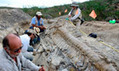 Dinosaur tail found in Mexico | The Joy of Mexico | Scoop.it
