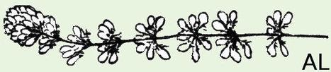 (FR) - Flore bonnier | kanlaipoulorondaidan.fr | Glossarissimo! | Scoop.it