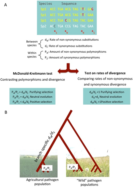 PLOS Pathogens: A Population Genomics Perspective on the Emergence and Adaptation of New Plant Pathogens in Agro-Ecosystems (2012) | Plant Pathogenomics | Scoop.it