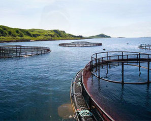 Cooke Aquaculture purchases Scottish salmon firm - FIS | Aquaculture | Scoop.it