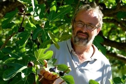 Vaison-la-romaine: Les figues bio de Pierre Baud   wiki2d - Contribuons au développement durable en région Provence-Alpes-Côte d'Azur (PACA)   Patrimoine Végétal et Biodiversité   Scoop.it