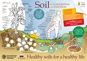 [Poster] Soil An essential ingredient to healthy food and nutrition | Permaculture - [creatively] re-design our communities, environment and our behavior | Scoop.it