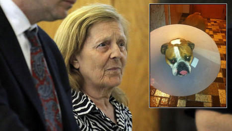 Neighbor Accused of Throwing Ammonia in Dog's Eyes   Animal rights   Scoop.it