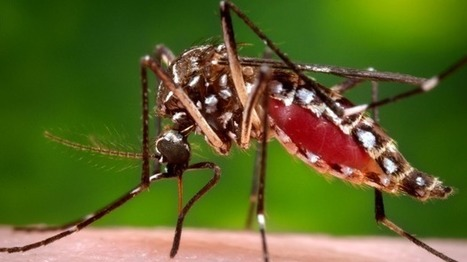 Ross River virus and dengue fever increasing in Australia as global temperatures rise | Virology News | Scoop.it