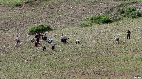 UN: Drought-hit North Korea Cuts Food Distribution | Food Security | Scoop.it