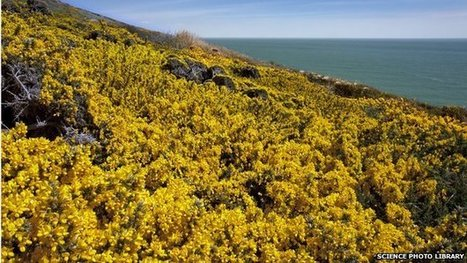 Unusual number of #UK flowers bloom #climate #warming | Messenger for mother Earth | Scoop.it