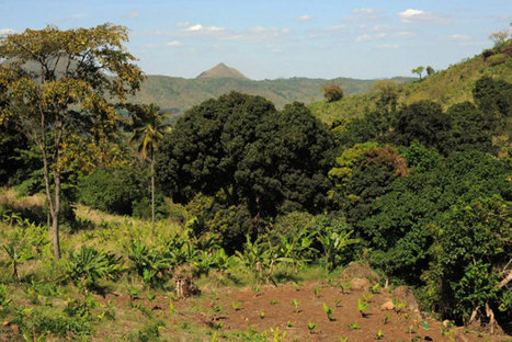 L'agriculture intelligente face au climat pourrait déboucher sur un renouveau rural, selon la FAO   CACG - Water &Territorial Devloppment -----Eau & Développement Territorial   Scoop.it