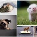 32 photos qui vous forceront a dire : c'est mignon !! | Actualités Photographie | Scoop.it