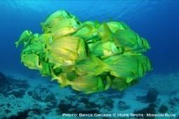 Discovering the Hidden Jewel off the Coast of Baja California | Blue Planet | Scoop.it