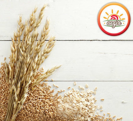 How to buy white oats- be a wise buyer of healthy food | Business | Scoop.it