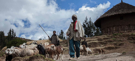 Protecting livestock breeds for people   Sustainable Livestock development   Scoop.it