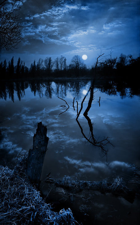 Wolf moon..... | BEAUTY ART | Scoop.it