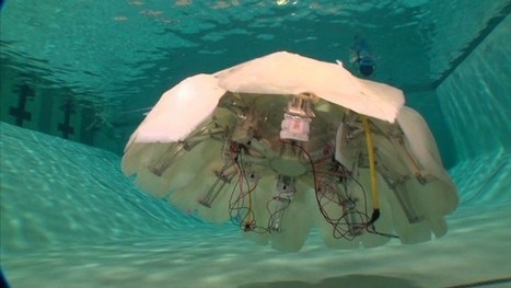 Robotic jellyfish could be undersea spy | Government Law | Scoop.it