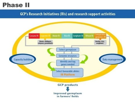 How to create a successful crop research partnership: the Generation Challenge Programme | Plant science | Scoop.it