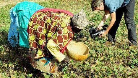 Climate change set to wreck African bean farming   Questions de développement ...   Scoop.it