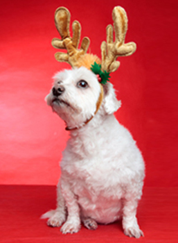 10 Great Pet-Related Gifts | Pet Health Tips | Scoop.it