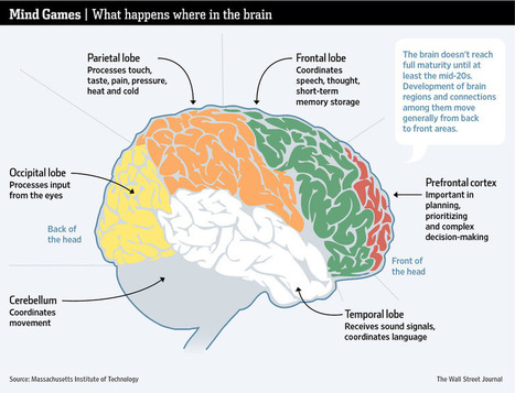 Delayed Development: Blame the 20-Something Brain | Aprendizagem de Adultos | Scoop.it