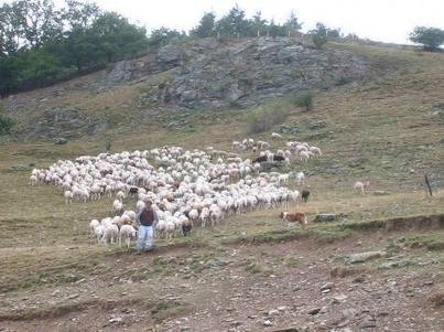 Des chercheurs soutiennent les éleveurs contre le loup | montagne et développement durable | Scoop.it