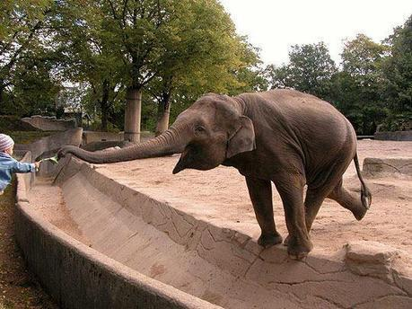 Twitter / CuteEmergency: Elephant stretching for a snack. ... | practice | Scoop.it