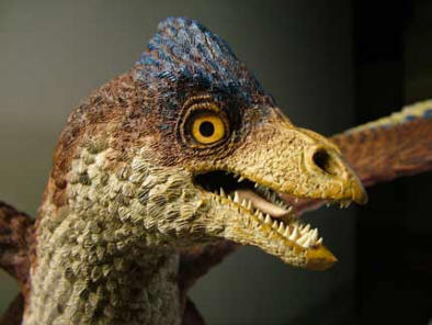 Tooth loss in birds occurred about 116 million years ago | Amazing Science | Scoop.it