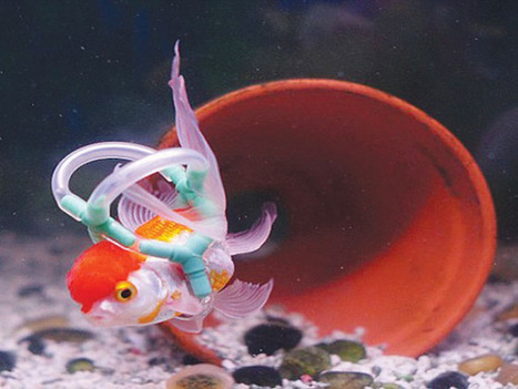 Owner Makes Lifejacket For Pet Fish Called Einstein Who Can't Swim | All about water, the oceans, environmental issues | Scoop.it