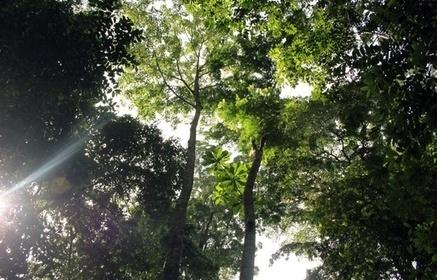 Gabon: Le deuxième poumon de la planète peut-il encore être sauvé? | Biodiversité | Scoop.it