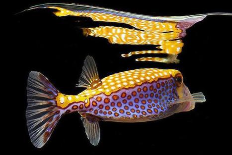 В ярких красках: подводный мир глазами Марка Лайта   Amuze   Scoop.it