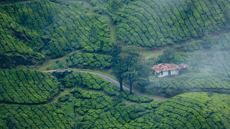 Munnar – a romantic paradise for honeymoon in Kerala | | Hotel | Scoop.it