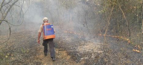 10 mil hectáreas afectadas por incendios en SLP; detienen a 2   fraude&dañoenpropiedadajena   Scoop.it