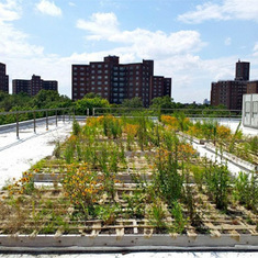 Why Manhattan's Green Roofs Don't Work--and How to Fix Them: Scientific American | Sustain Our Earth | Scoop.it
