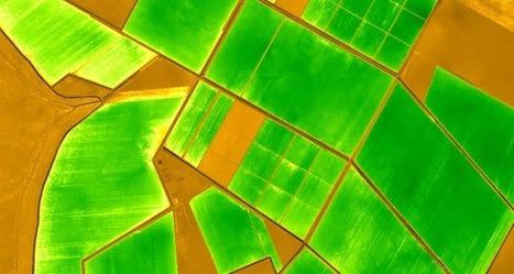 NDVI in agriculture | Precision Agriculture | Geoflorestas | Scoop.it