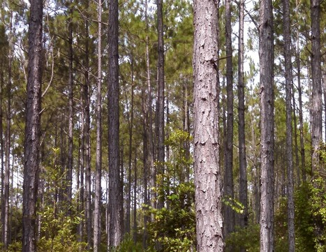 Molpus Woodlands Group Announces the Acquisition of 87,225 Acres of Timberland in Northern Florida and Southern Georgia | Timberland Investment | Scoop.it