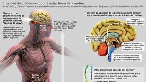 Priones que saltan del intestino al cerebro, la última explicación del párkinson / Reportajes / SINC   Biología y Geología   Scoop.it