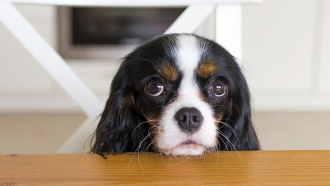 Dogs that look more like puppies have an evolutionary advantage   The-Dog-Digest   Scoop.it