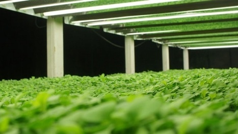 Indoor urban vertical farming; the next gardening venture for survival and the new agriculture – LifeWise | ApocalypseSurvival | Scoop.it
